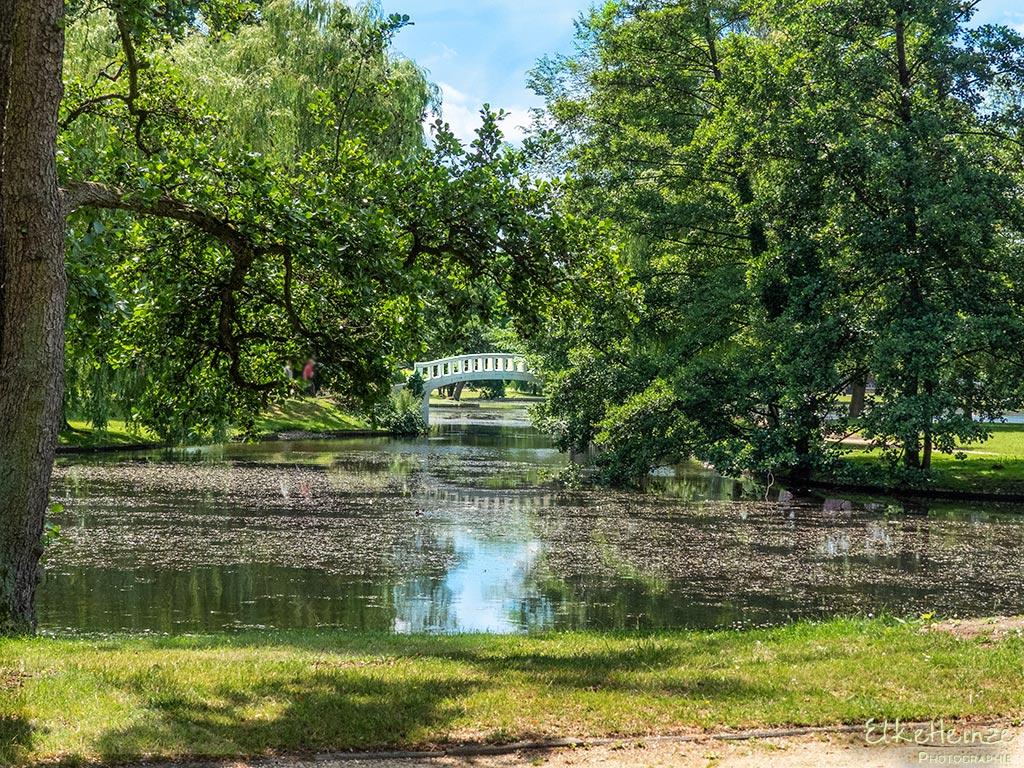 Stadtpark Juni 2019 Monatsmitte