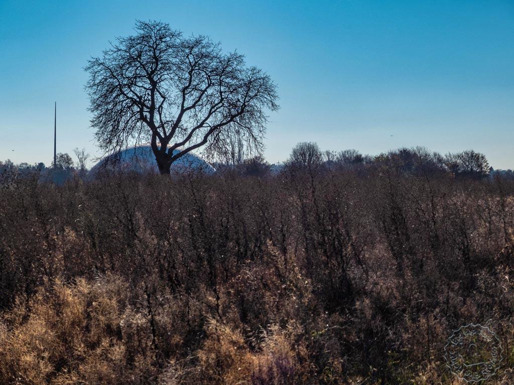November 2018 - Baum im Feld