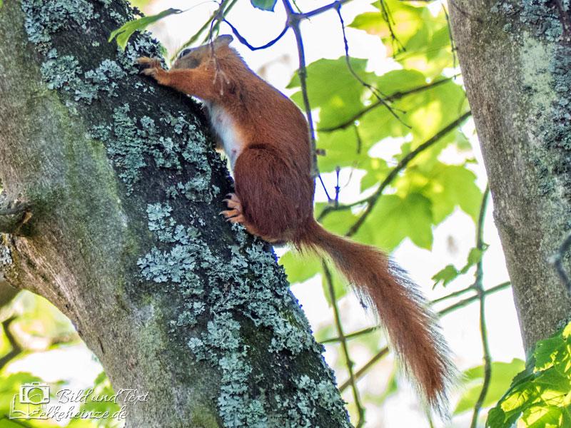 Was Fressen Eichhörnchen Gerne