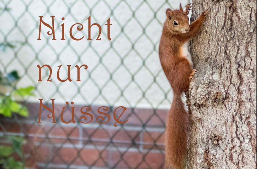 Was fressen eigentlich Eichhörnchen?
