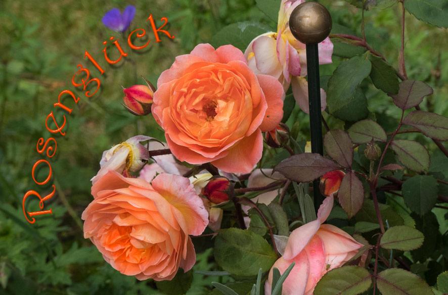 Kurzgeschichte: Gretas Blumen
