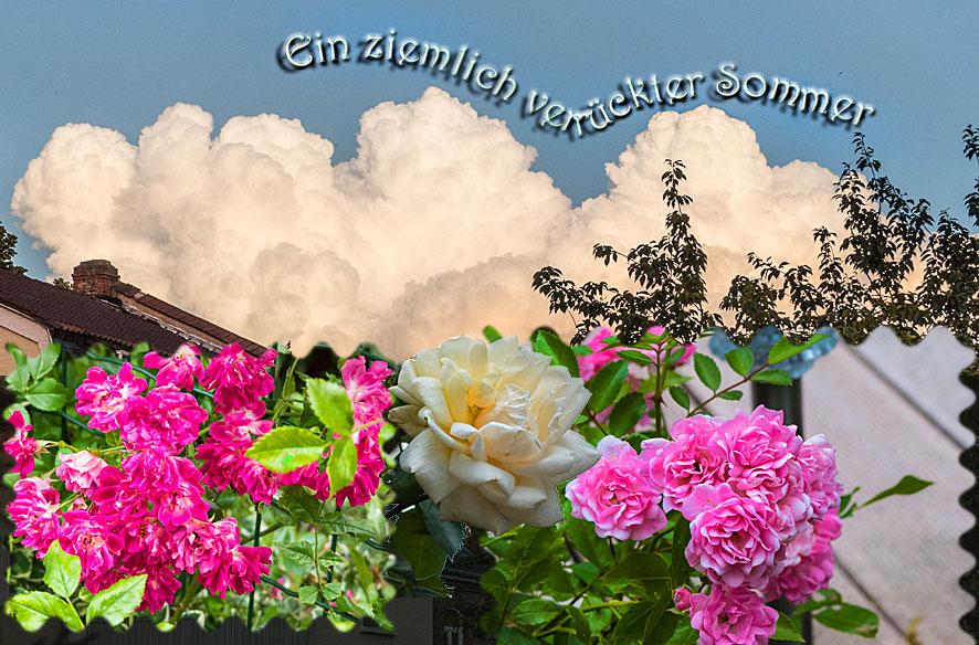 Rosensommer & Gar-kein-Wetter