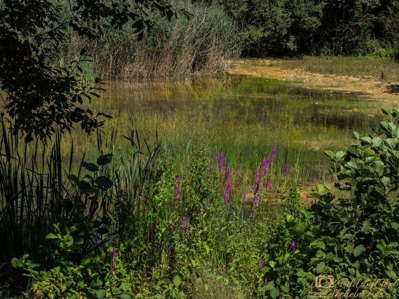 Der große Teich - trocken