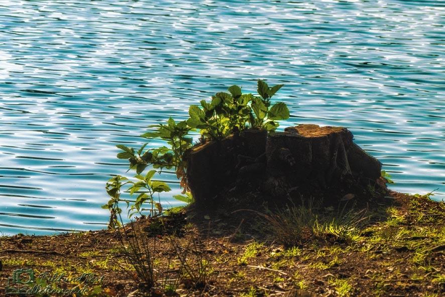 Wasser und Baumstumpf im Gegenlicht