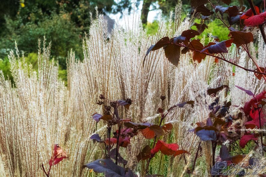 Gräser-und-Blätter