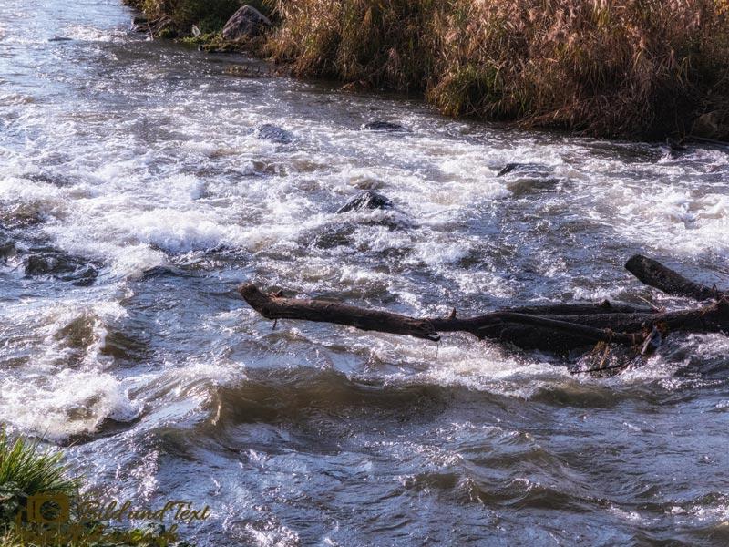 Wildwasser an der Nidda