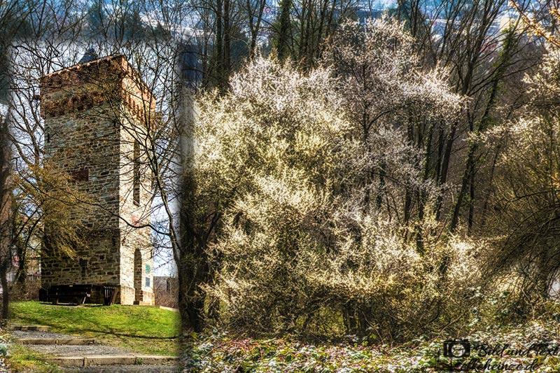 Burgwarte in Bad Soden am Taunus