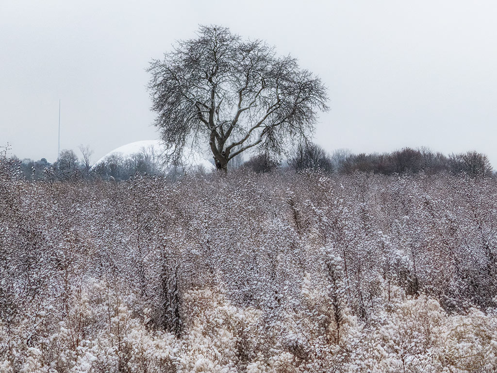 Dezember 2018 - mit Schnee