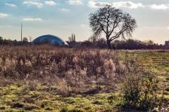 Februar 2018 - Baum im Feld