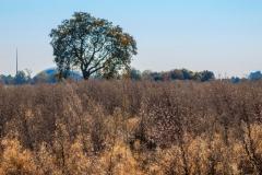 Oktober 2018- Die Blätter fallen