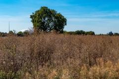 September 2018 - Baum im Feld