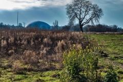 Januar 2018 - Baum im Feld
