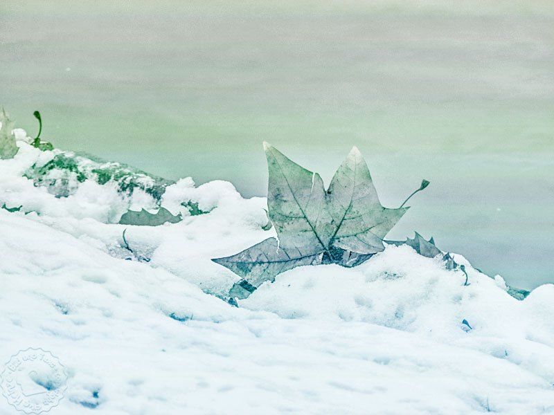 Januar - Schnee am Main