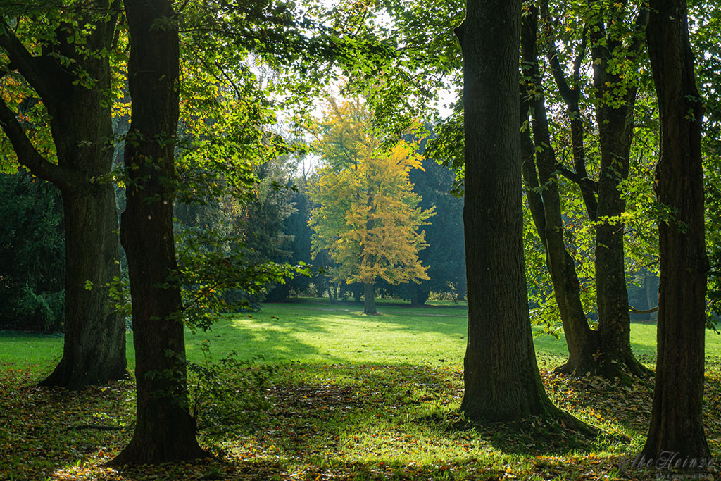 Solmspark in Frankfurt