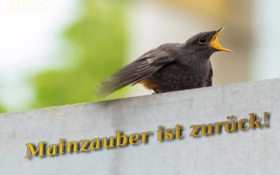 Neustart – Mainzauber reloaded
