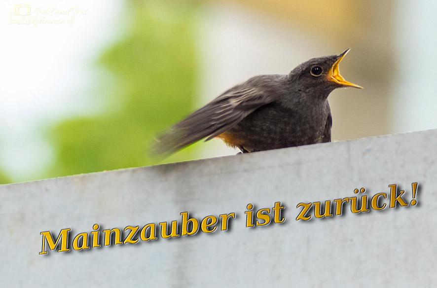 Neustart – Mainzauber reloaded