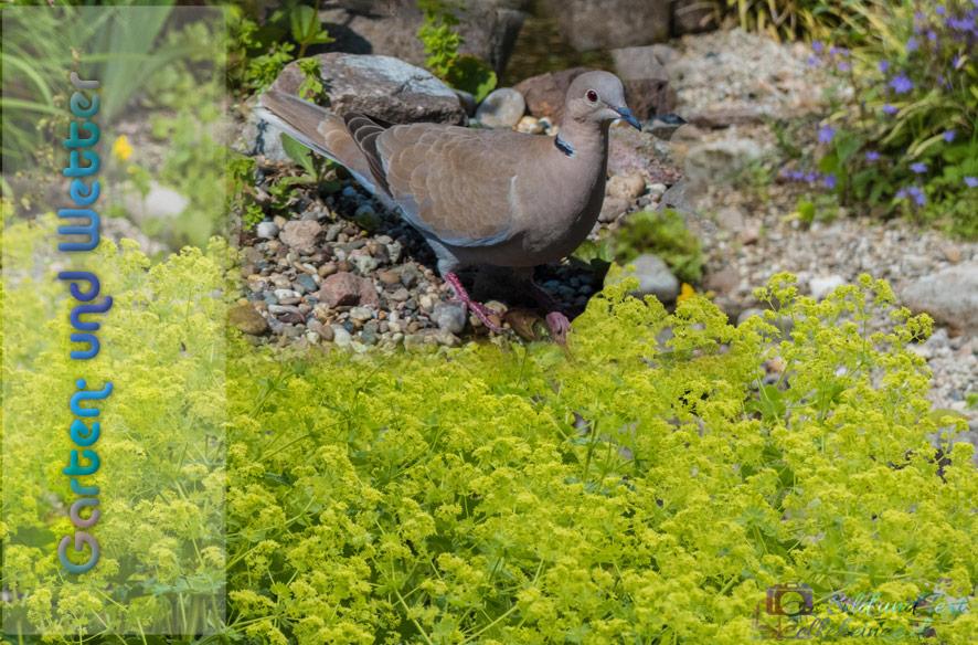 Garten – und Wettergeschnatter