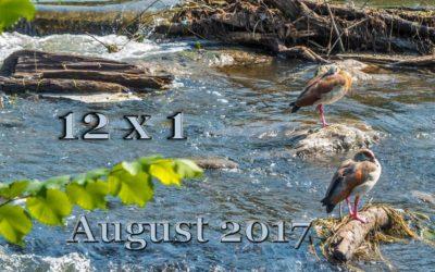 12 x 1 am Nieder Wildwasser