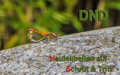DND – Heidelibellengewimmel