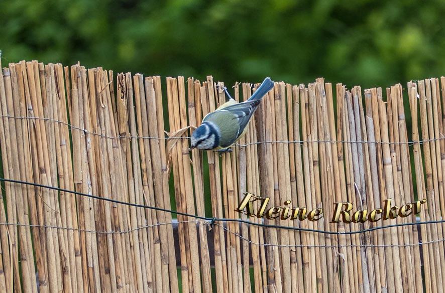 Vogelparadies Garten