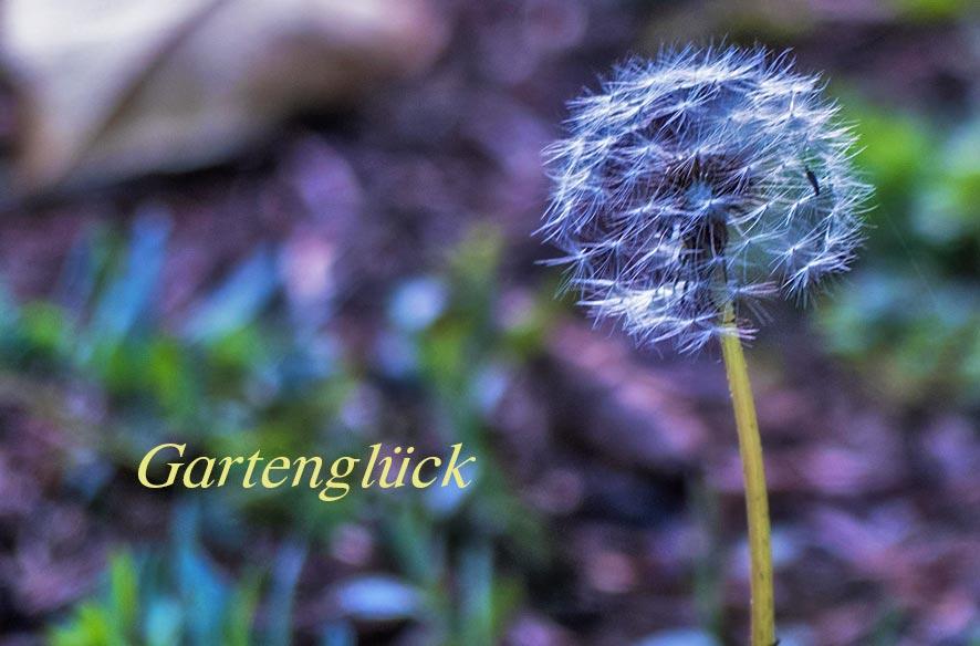 Letztes Oktober-Gartenglück