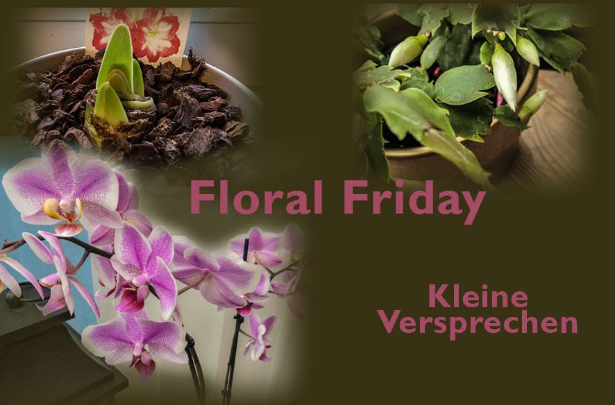 Floral Friday – das wird noch (drinnen)