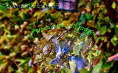 November: Schmetterlinge, Vögel, blühende Sträucher