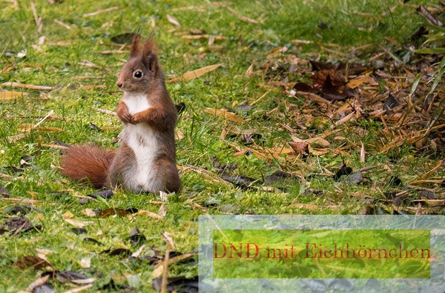 Eichhörnchen – DND
