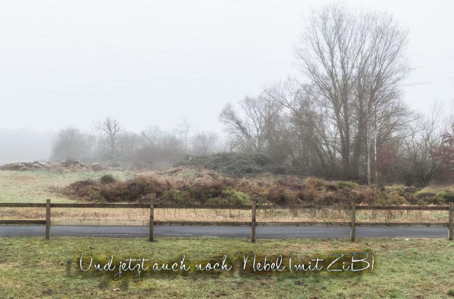 Die Schwanheimer Düne im Nebel (mit ZiB)