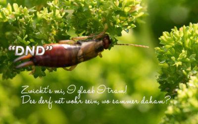 DND – Der Ohrwurm