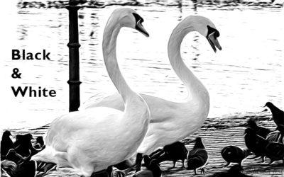 Black & White 2018_02