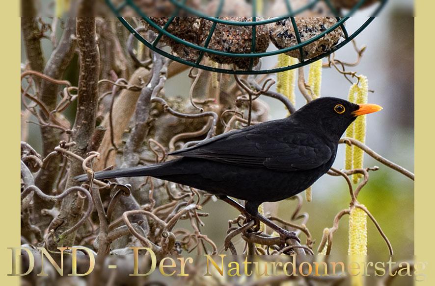 DND & 12 x 1 Projekt März