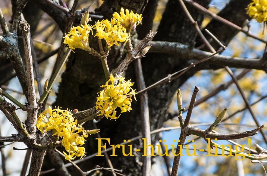 Frühling! – so schön!