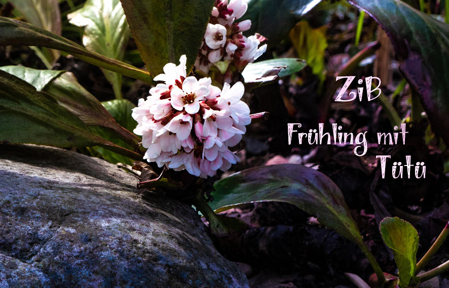 Frühlingsfreude – ZiB & Gartenglück