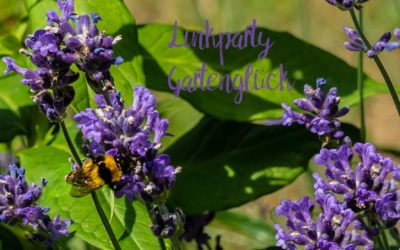 Linkparty & Sommergrippe
