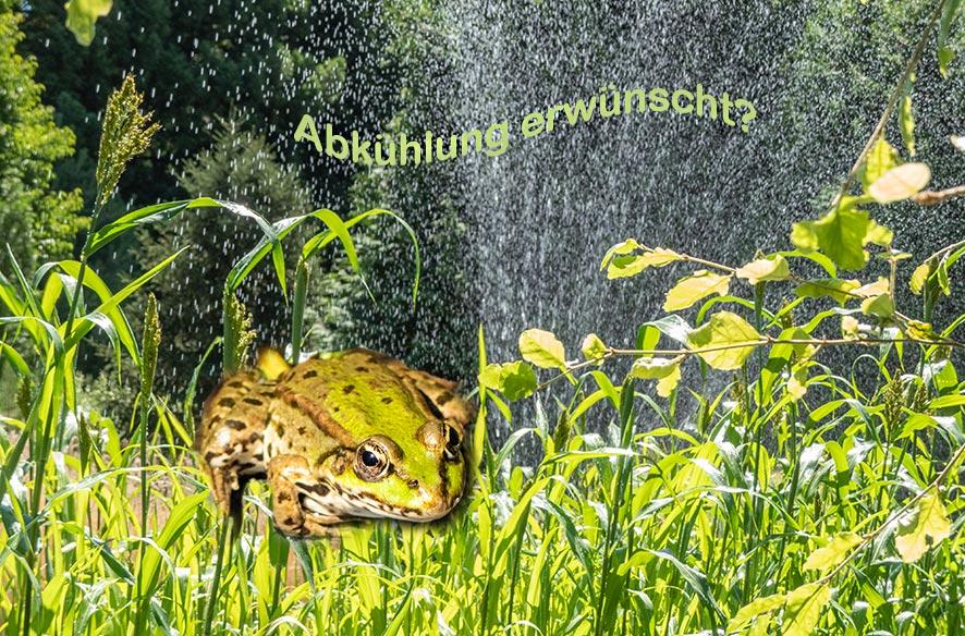 """Mein """"T"""" zum Botanischen Garten"""