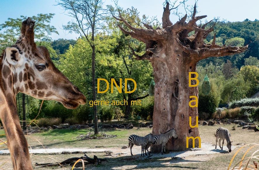 Opelzoo DND – auch mit Baum