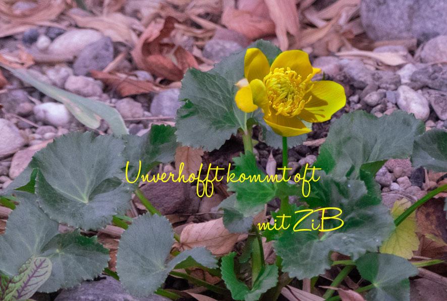 ZiB mit Gartenglück