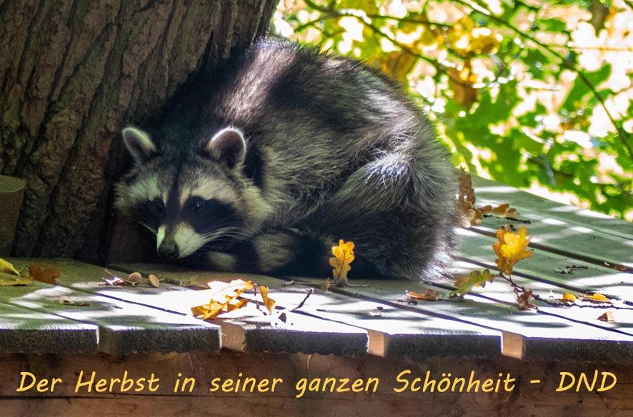 DND- Herbst in Höchst und Wiesbaden