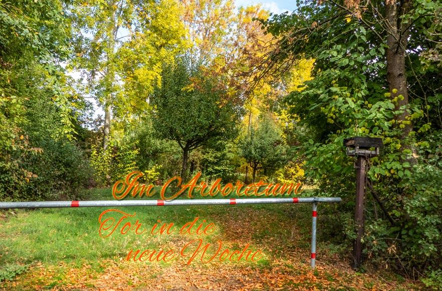 Arboretum – 'T in die neue Woche'