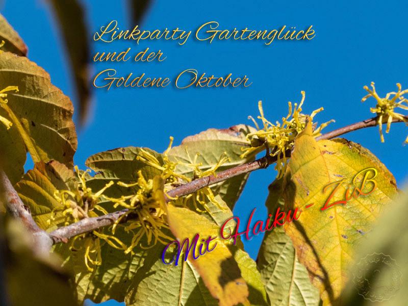 Gartenglück im goldenen Oktober