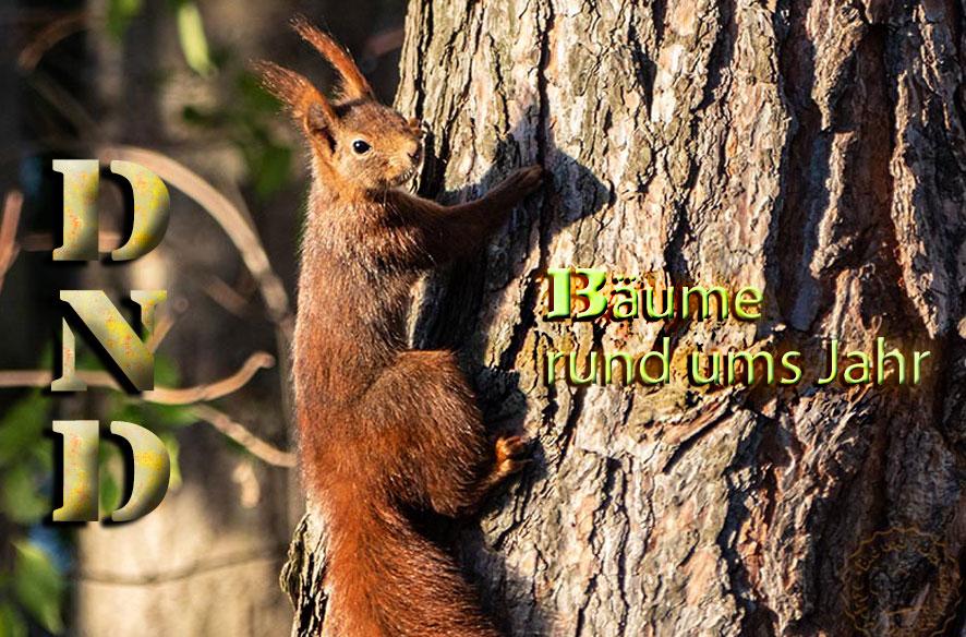 DND – Bäume rund ums Jahr