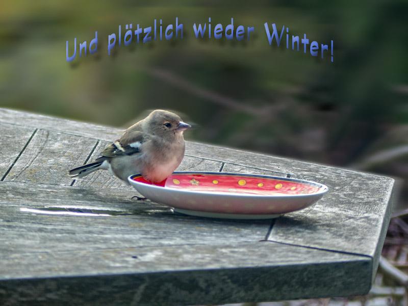 Mit Sturm & Buchfink (DND)