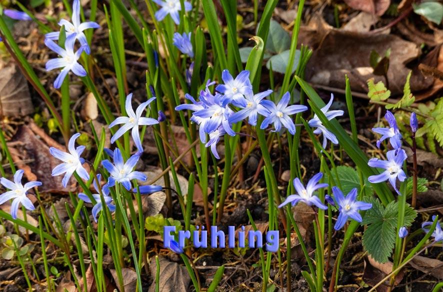 DND – Frühling! – wie schön