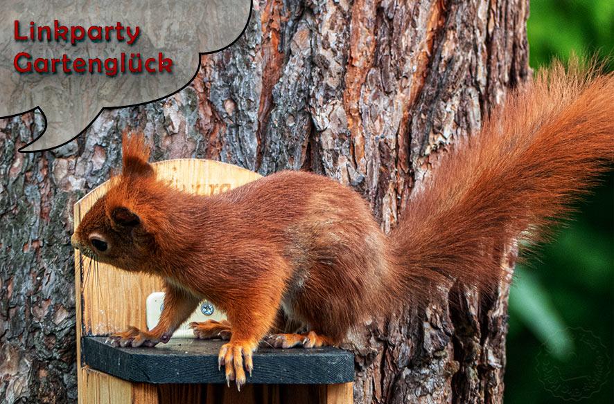 Linkparty Eichhörnchenglück