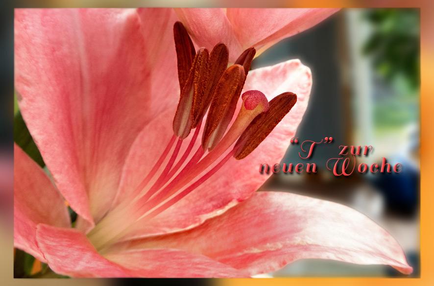 Tor und Blumen für die neue Woche