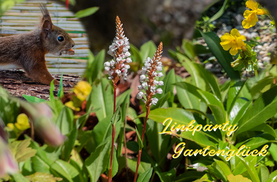 Frühlingsglück Gartenteich