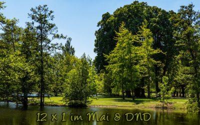 Natur pur für 12×1 & DND