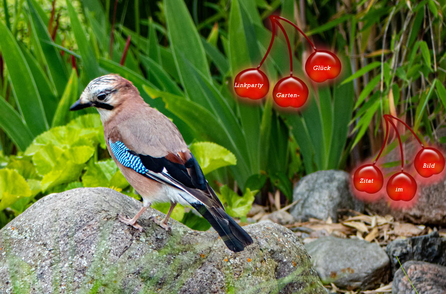 Gartenglück: Tier- & Pflanzenwelt mit ZiB