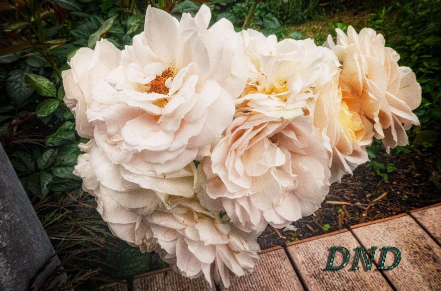DND – Regen für die Natur